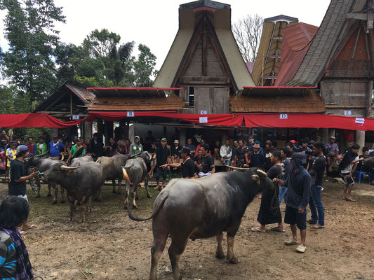 Zeremonie - Tana Toraja - Rantepao - Sulawesi - travelumdiewelt.de
