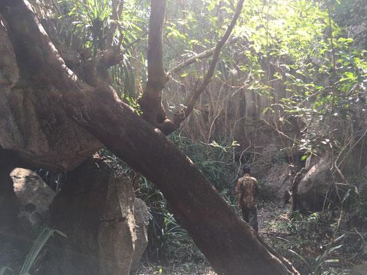 Dschungel Walk- Geheimtipp - Sulawesi - travelumdiewelt.de