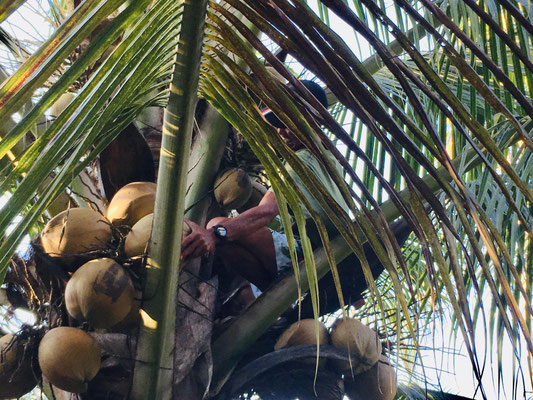 Dschungeltour - PokiPoki - Togian Islands - Sulawesi - travelumdiewelt.de