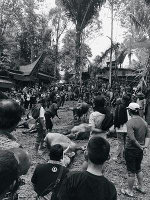 Büffelschlachtung - Tana Toraja - Sulawesi - travelumidewelt.de