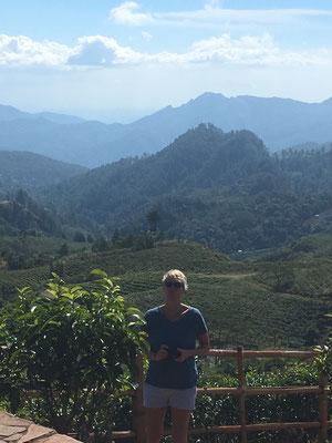 Malino Highlands  Tour - Teeplantagen - Sulawesi - travelumdiewelt.de