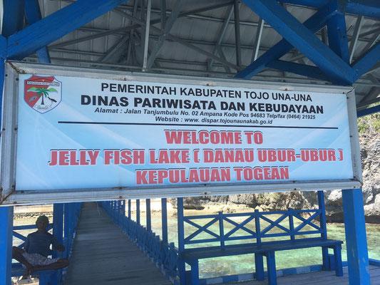 Jellyfish Lake - Togian Islands - Sulawesi - Reisetipps - travelumdiewelt.de