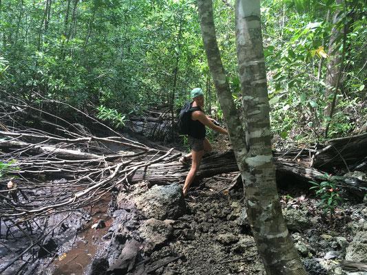 Dschungelwalk - Togian Islands - Reiseblog - Sulawesi - travelumdiewelt.de