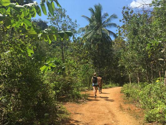Dschungel - Rammang Rammang - Sulawesi -travelumdiewelt.de