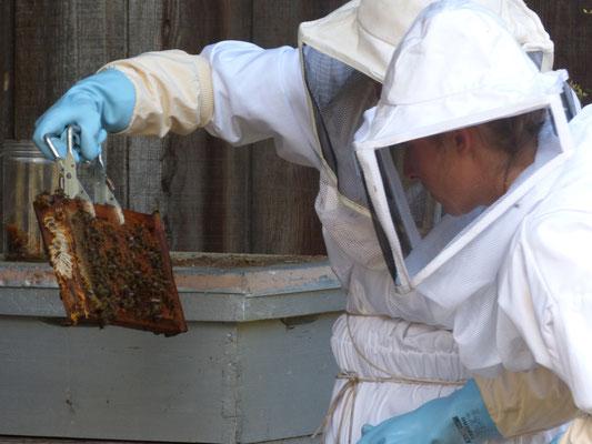 ©La Ruche de Pinsolle / Apicultrices qui vérifient l'état d'un cadre de la ruche / Ruchers 2014 / www.laruchedepinsolle.com
