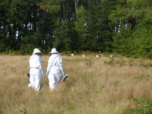 ©La Ruche de Pinsolle / Deux apicultrices allant contrôler l'état de leurs ruche / Ruchers 2014 / www.laruchedepinsolle.com
