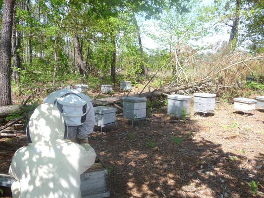 ©La Ruche de Pinsolle / Photo du rucher avec deux apiculteur en tenue / Ruchers 2009 / www.laruchedepinsolle.com