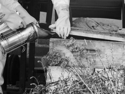 ©La Ruche de Pinsolle / Enfumage d'une hausse pour ouverture de la ruche N&B / Ruchers 2014 / www.laruchedepinsolle.com