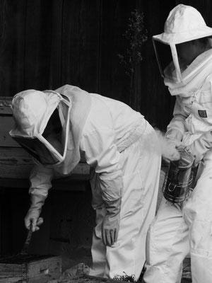 ©La Ruche de Pinsolle / Apicultrices qui vérifient l'état de leur ruche / Ruchers 2014 / www.laruchedepinsolle.com