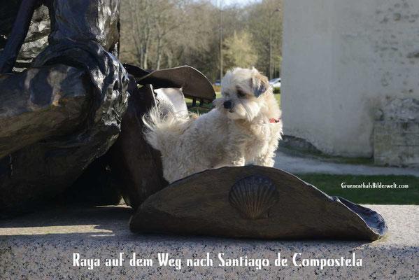 Raya auf dem Weg nach Santiago de Compostella.
