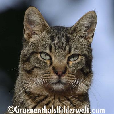 Peniscola; Katze