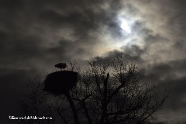 Storch beim Vogelpark in Villars les Dombes