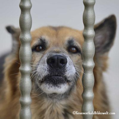 Peniscola; Wachhund