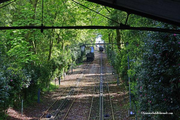 Die Fahrt geht durch den Blätterwald.