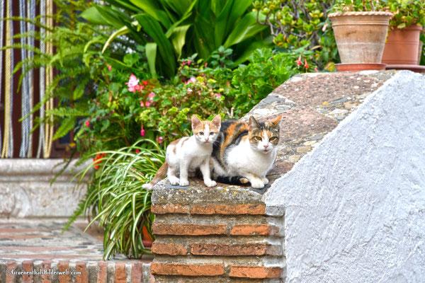 Katzenjunges sucht Schutz vor den Fremden