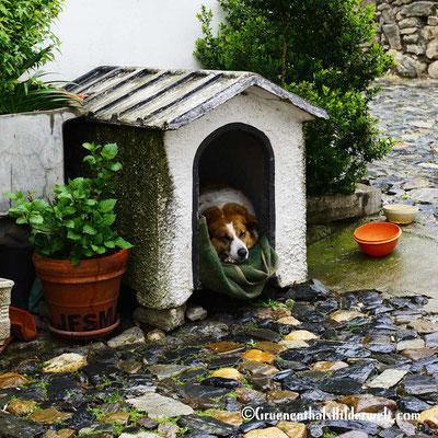 Ist doch schön bei Regen ein Dach über dem Kopf zu haben.