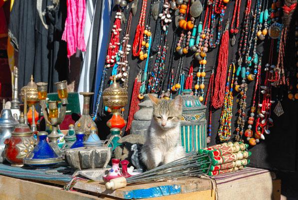 Marokko; Schmuck; Katze