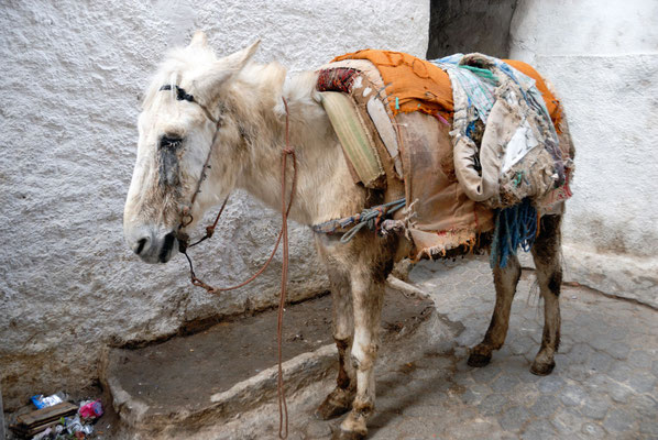 Marokko; Esel