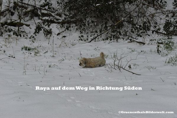 Raya auf dem Weg in den Süden