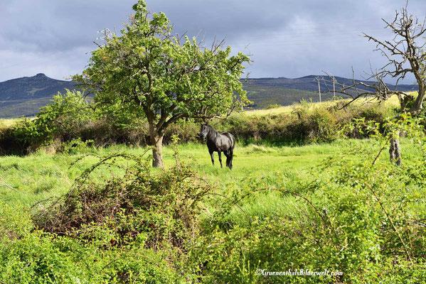 Piedrahita;Pferd