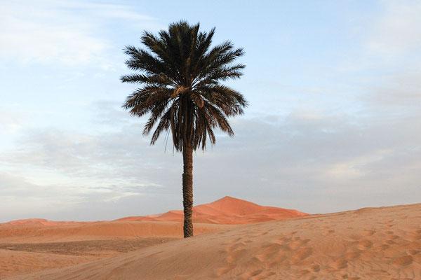 Marokko; Wüste; Palme