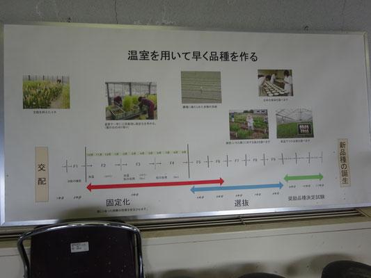 温室を使用することで開発年数が短縮できます。