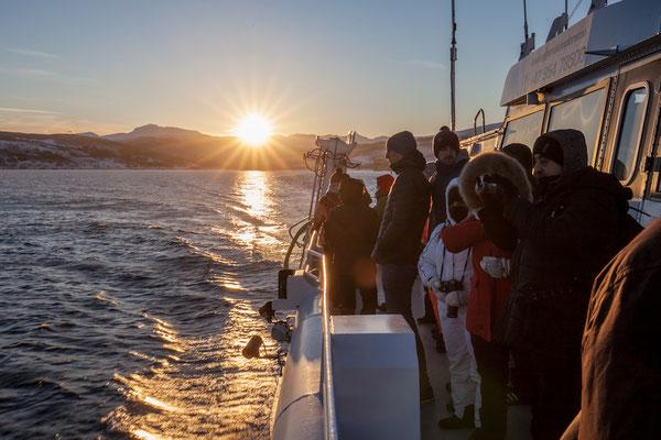 Sehenswürdigkeiten und Auflüge in Tromsö: Fjord Schifffahrt