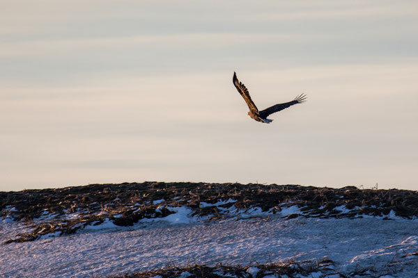Sehenswürdigkeiten und Auflüge in Tromsö: Fjord Schifffahrt - Seeadler