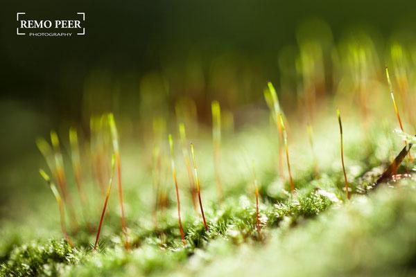 Makrofotografie - Wie fotografiert man Blumen und Pflanzen?