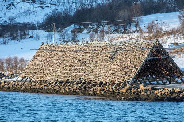 Sehenswürdigkeiten und Auflüge in Tromsö: Fjord Schifffahrt - Fischtrocknung in Norwegen