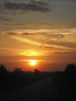 Sunset im Yala National Park