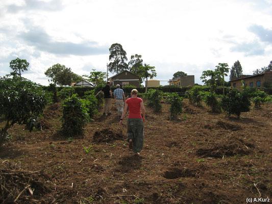 Die Lehrplantage eines Kinderzentrum - The plantation of a child development center