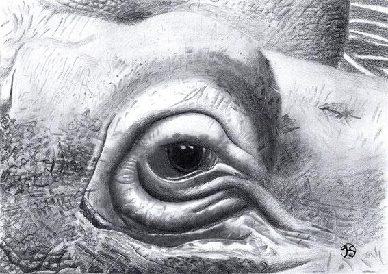 Rechtes Flusspferdauge von PLATACH im Karlsruher Zoo.  320.-€  Repro 1/4  3/2019  53X63 cm  190.-€   Repro 2/4  3/2019  41X53 cm  mit weißem Passepartout und schwarzem Holzrahmen  180.-€   Repro 374  3/2019  34X 49 cm  180.-€