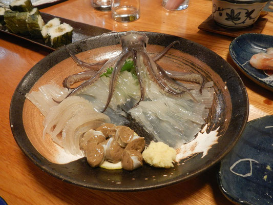 Squid in Hakodate, Hokkaido, Japan 2013