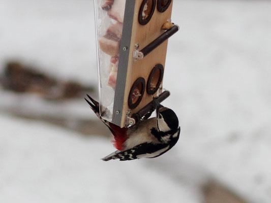 Кормушка для птиц - подарок фотографу