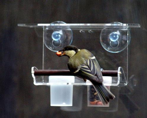 Универсальная кормушка для птиц Двушка