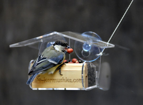Арт Домик с птичками