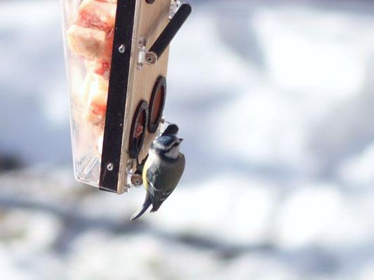 Необычная кормушка для птиц - замечательный подарок друзьям и Природе