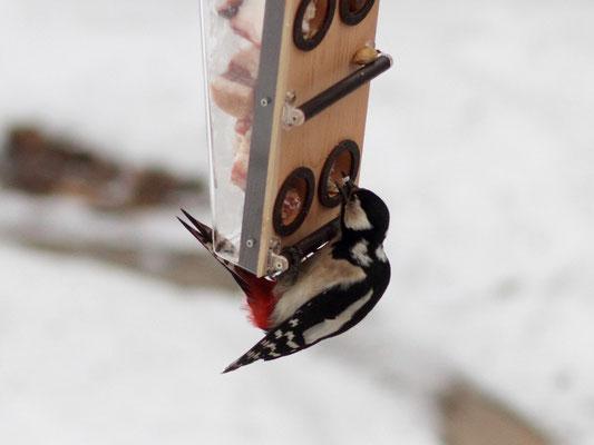 Кормим птиц на кормушке Омега