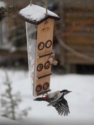 Кормушка для птиц - кладезь уникальных моментов вашего сада!