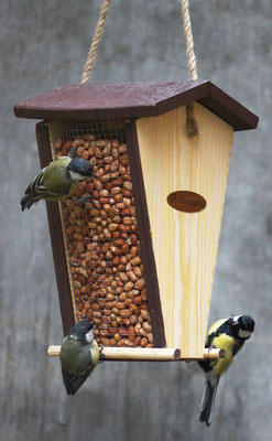 Арахис - лакомство для птиц