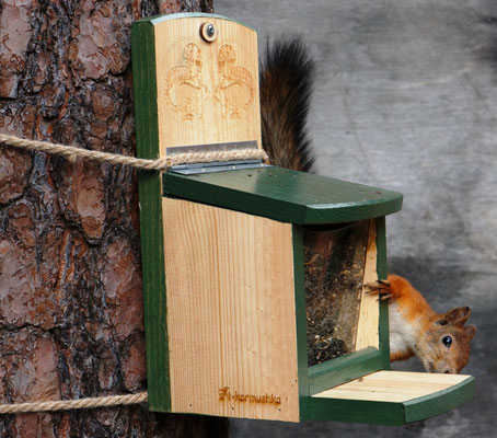 Кормушка с креплением на ствол дерева или стену