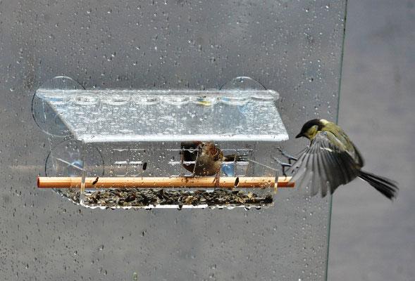 Замечательна для наблюдений за птицами оконная кормушка Веранда