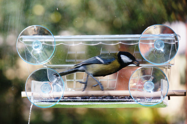 Кормушка для птиц и синичка