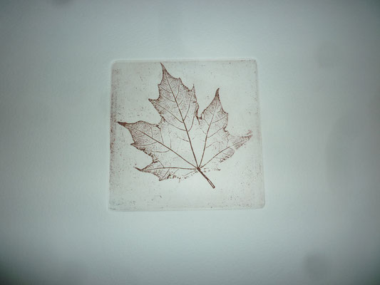 Ahorn-Blattskelett, 12 x 12 cm,