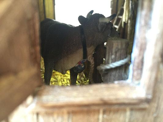 Vieille grange de Sully: Vue par la fenêtre arrière