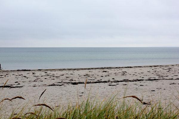 Aussicht aufs Meer mit Grashalmen im Vordergrund