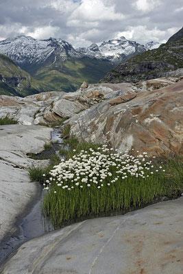 Gletscherschliff am Schlatenkees