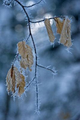 Nadelfrost