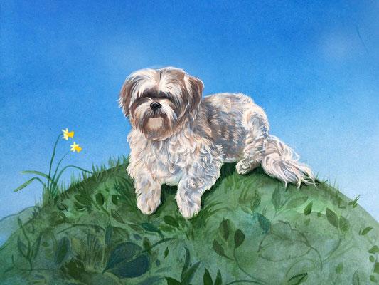 Portrait Hund/ Kunde: privat